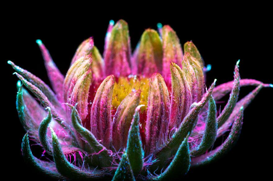 magical-photographs-of-plants-emitting-light-craig-burrows-2.jpg