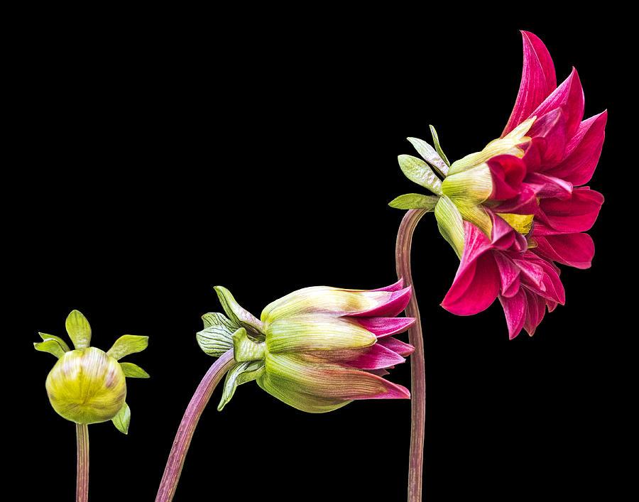bud-to-bloom-penny-pesaturo.jpg