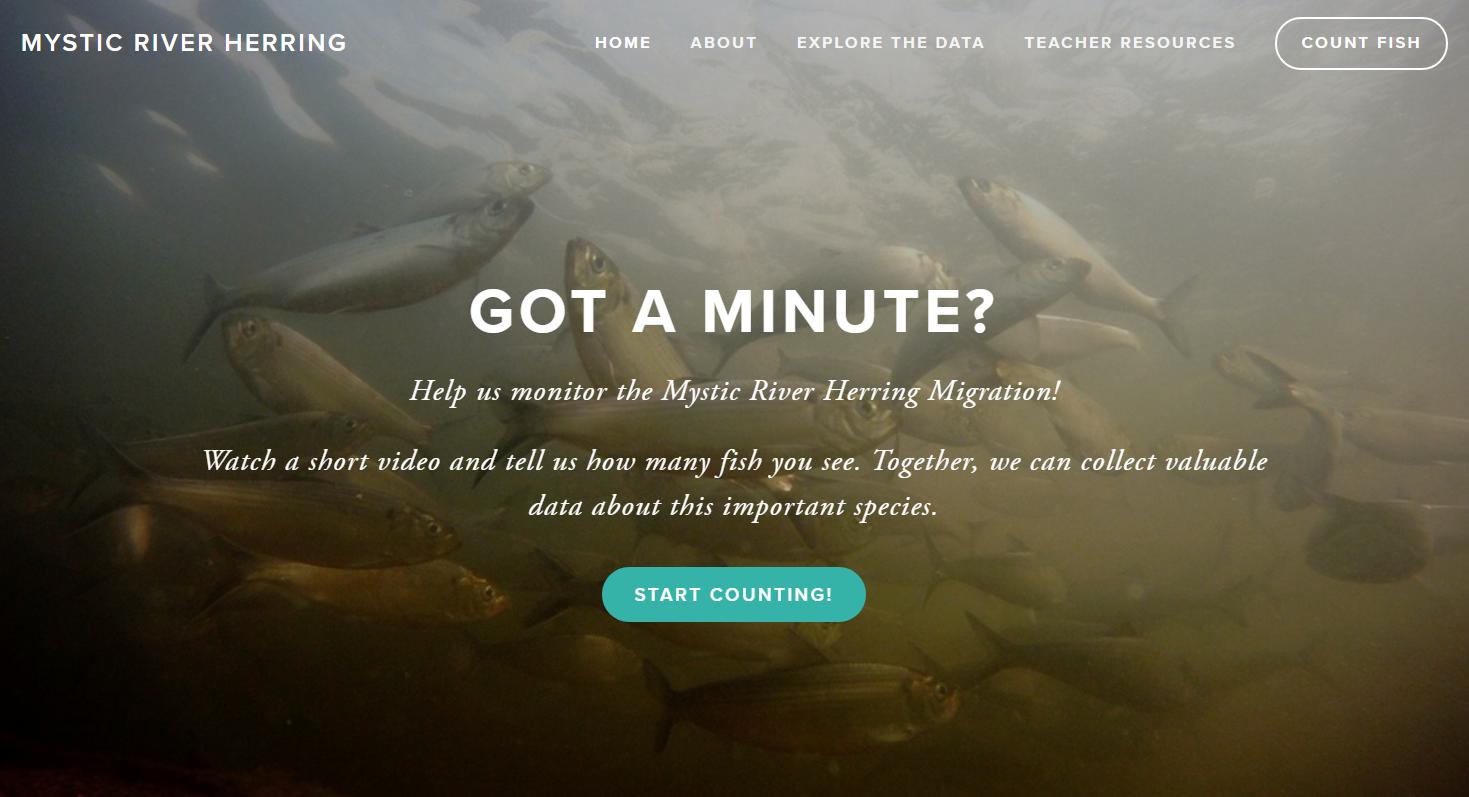 herringwebsite.PNG