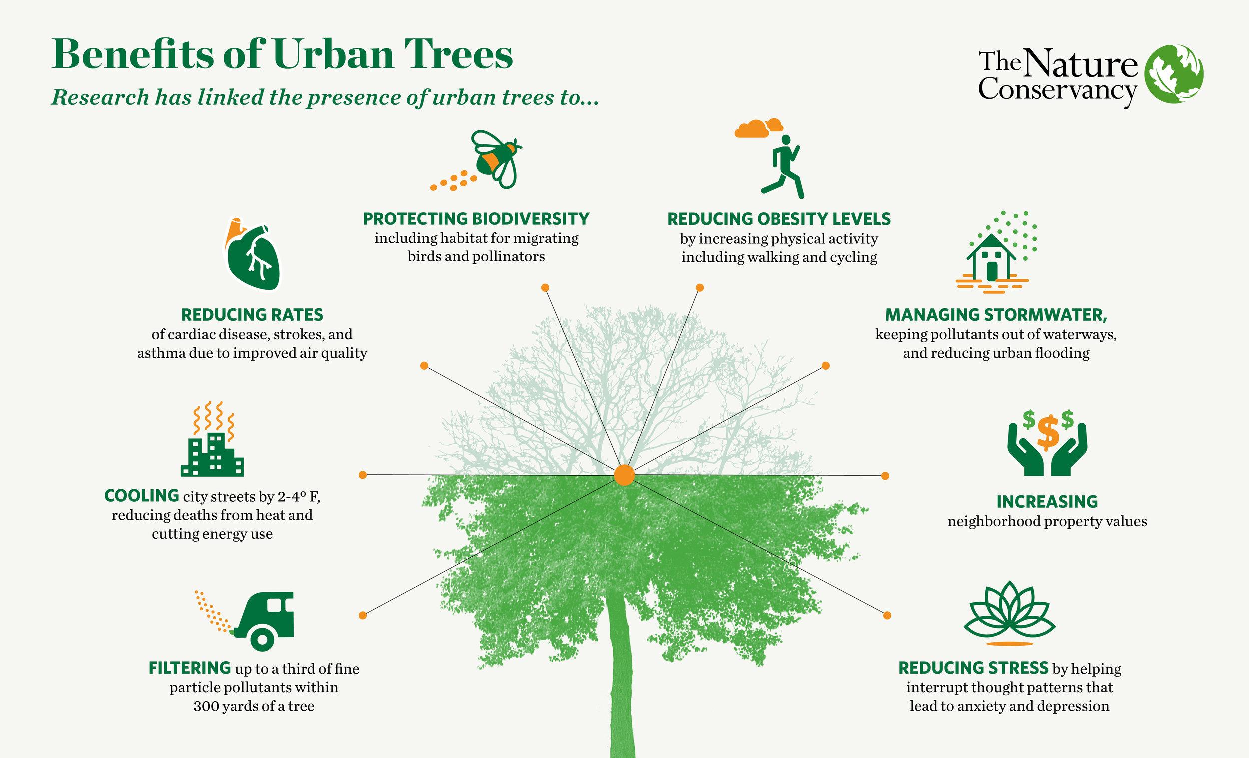 Cities_Tree_Infographic-02.jpg