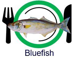 yes fish.JPG