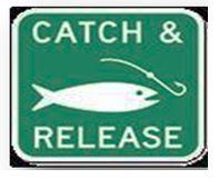 catch sign.JPG