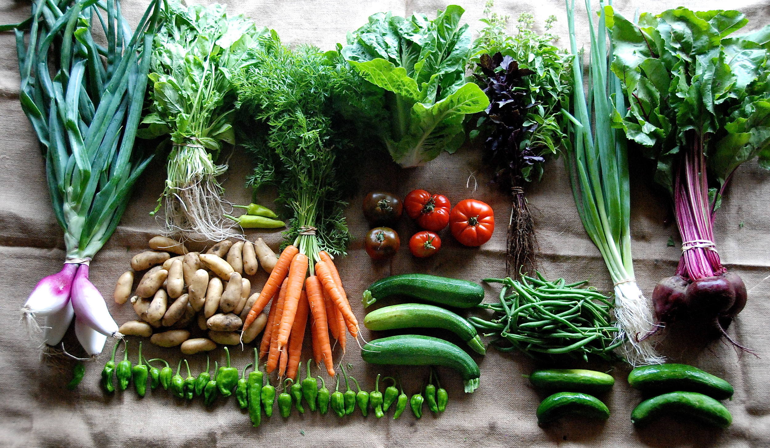 CSA Summer share box week #2