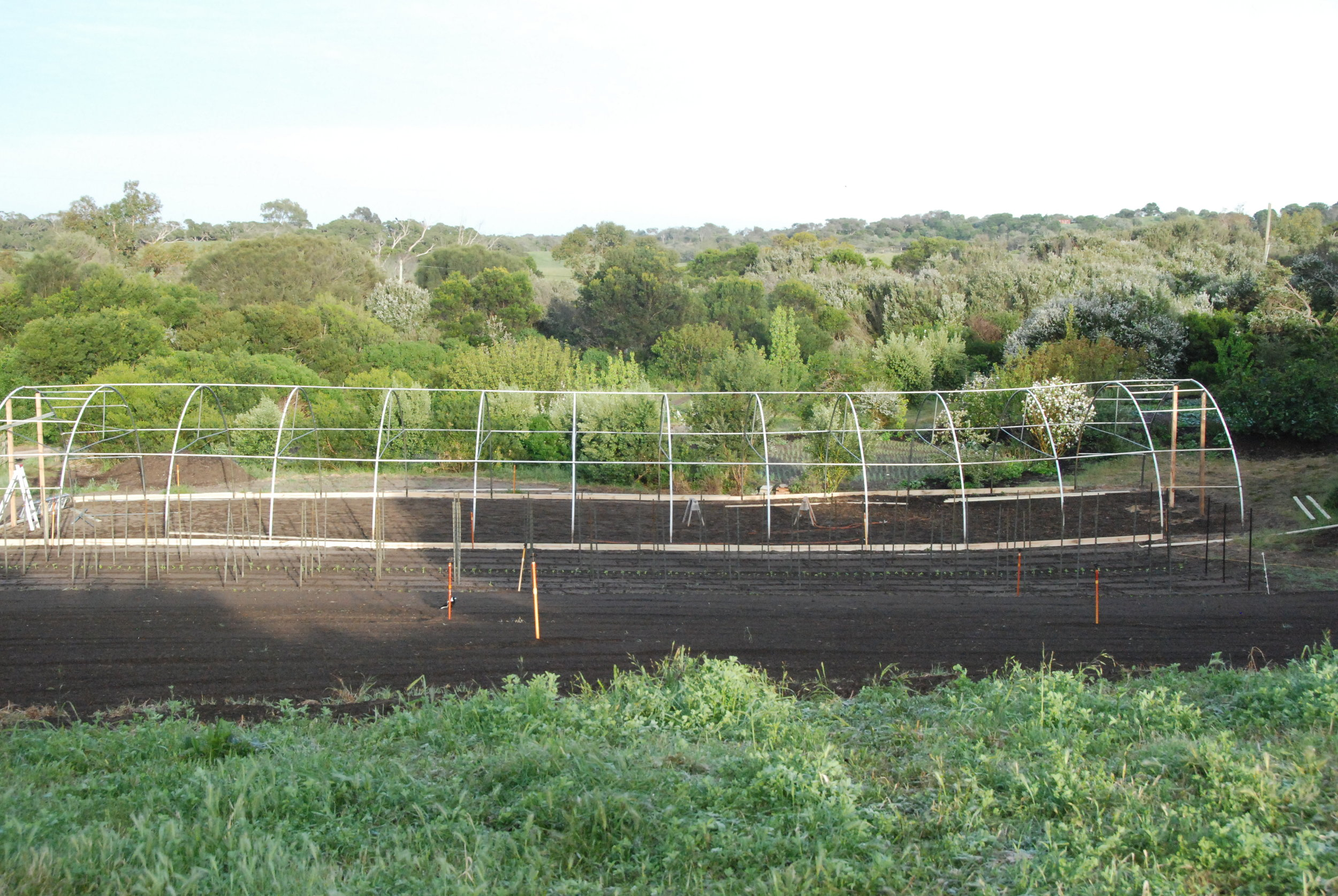 Polytunnel being built in Front Paddock