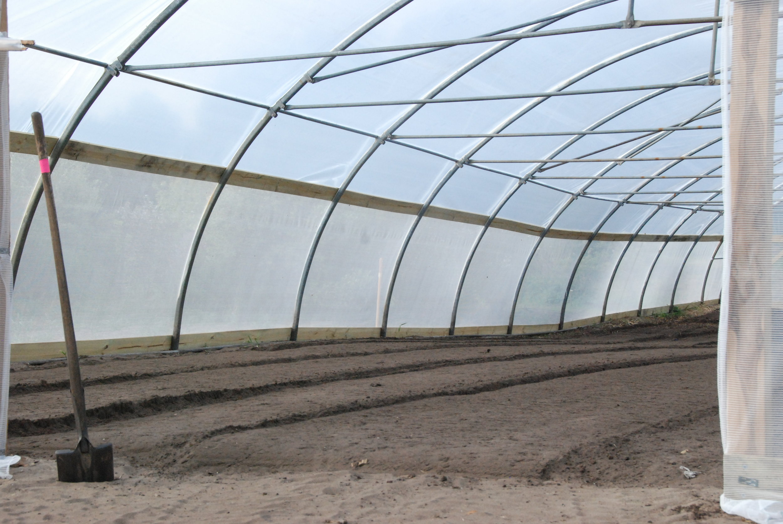new (recycled) polytunnel almost completed and ready for planting this seasons eggplant, capsicums and chillies