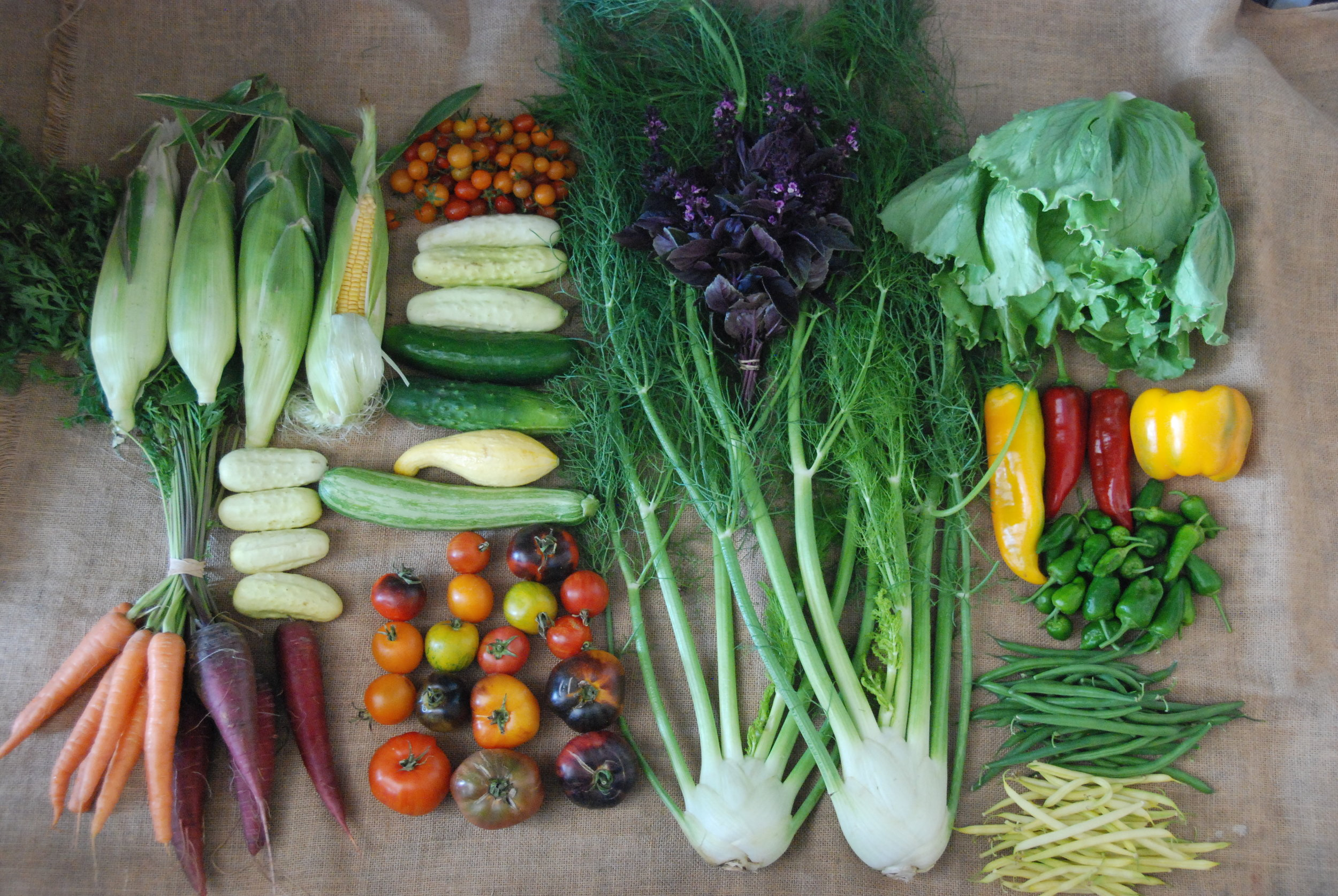 A CSA share from Week 15 of our 2018-2019 season.