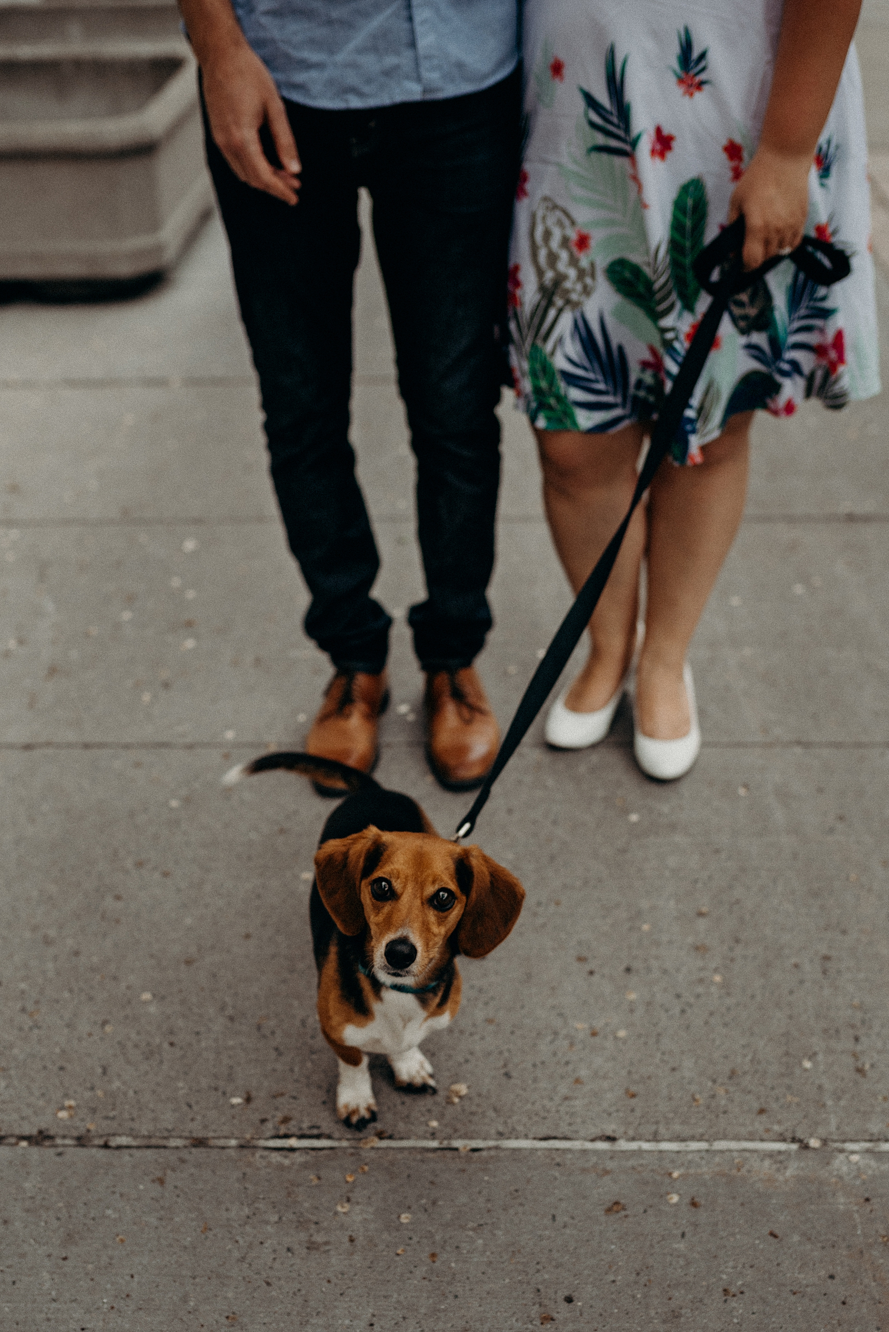 Bringing your Dog or Cat to an engagement session. Mocha Tree Studios Ottawa Toronto Montreal Wedding and Engagement Photographer and Videographer Dark Moody Intimate Authentic Modern Romantic Cinematic Best Candid 2