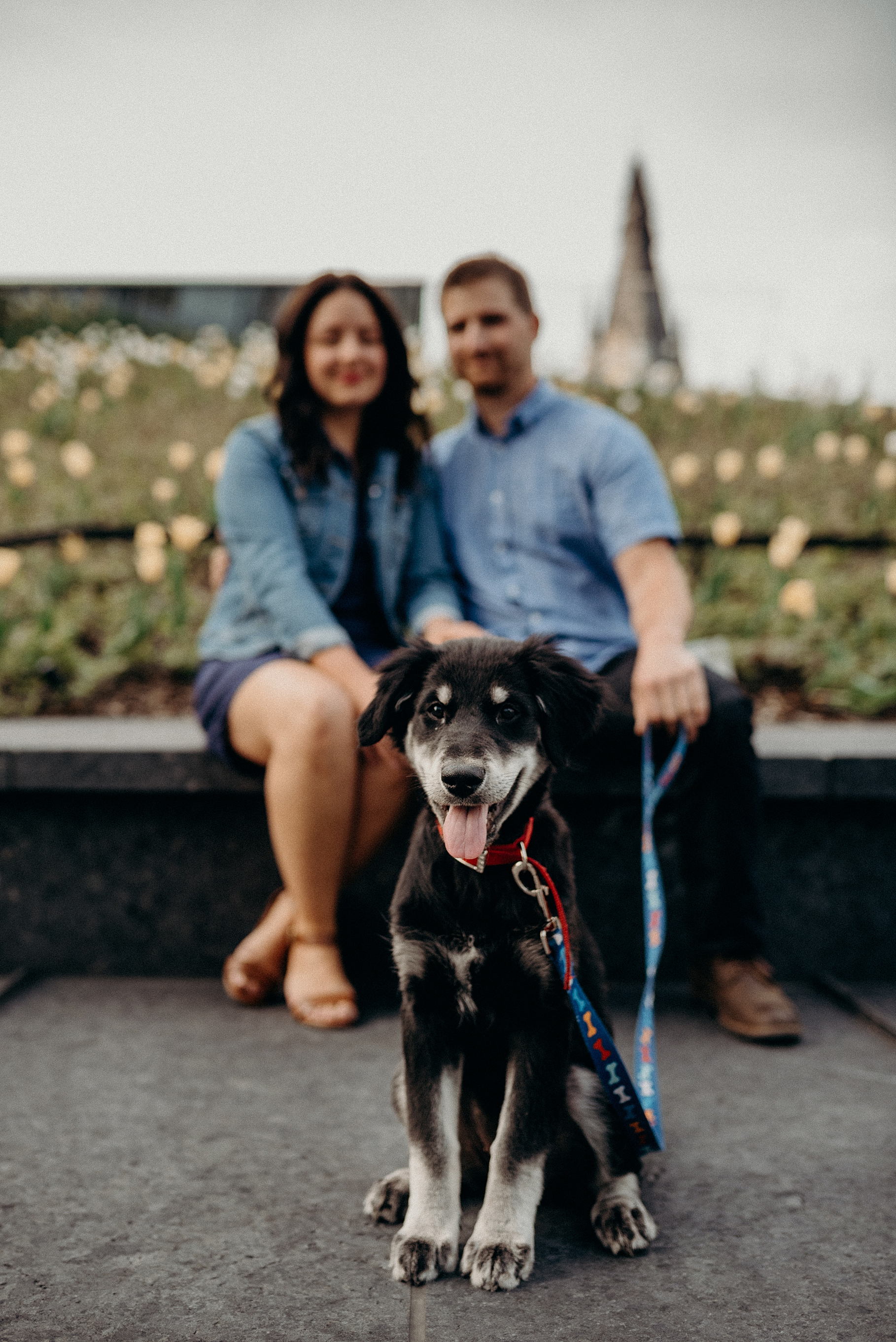 Bringing your Dog or Cat to an engagement session. Mocha Tree Studios Ottawa Toronto Montreal Wedding and Engagement Photographer and Videographer Dark Moody Intimate Authentic Modern Romantic Cinematic Best Candid 9