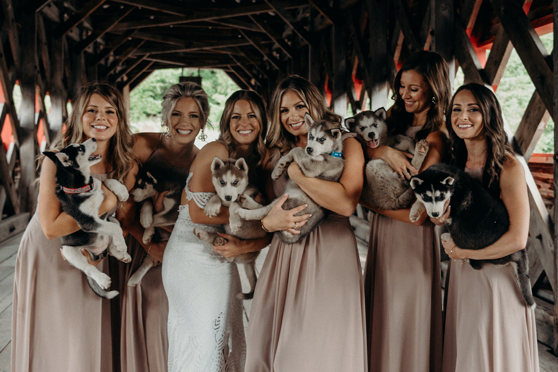 Puppies and Bridesmaids LeBelvedere