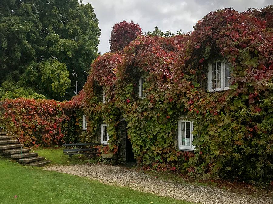 Leaves on Tu Hwnt I'r Bont begin to turn red in September. © Adrian McGarry