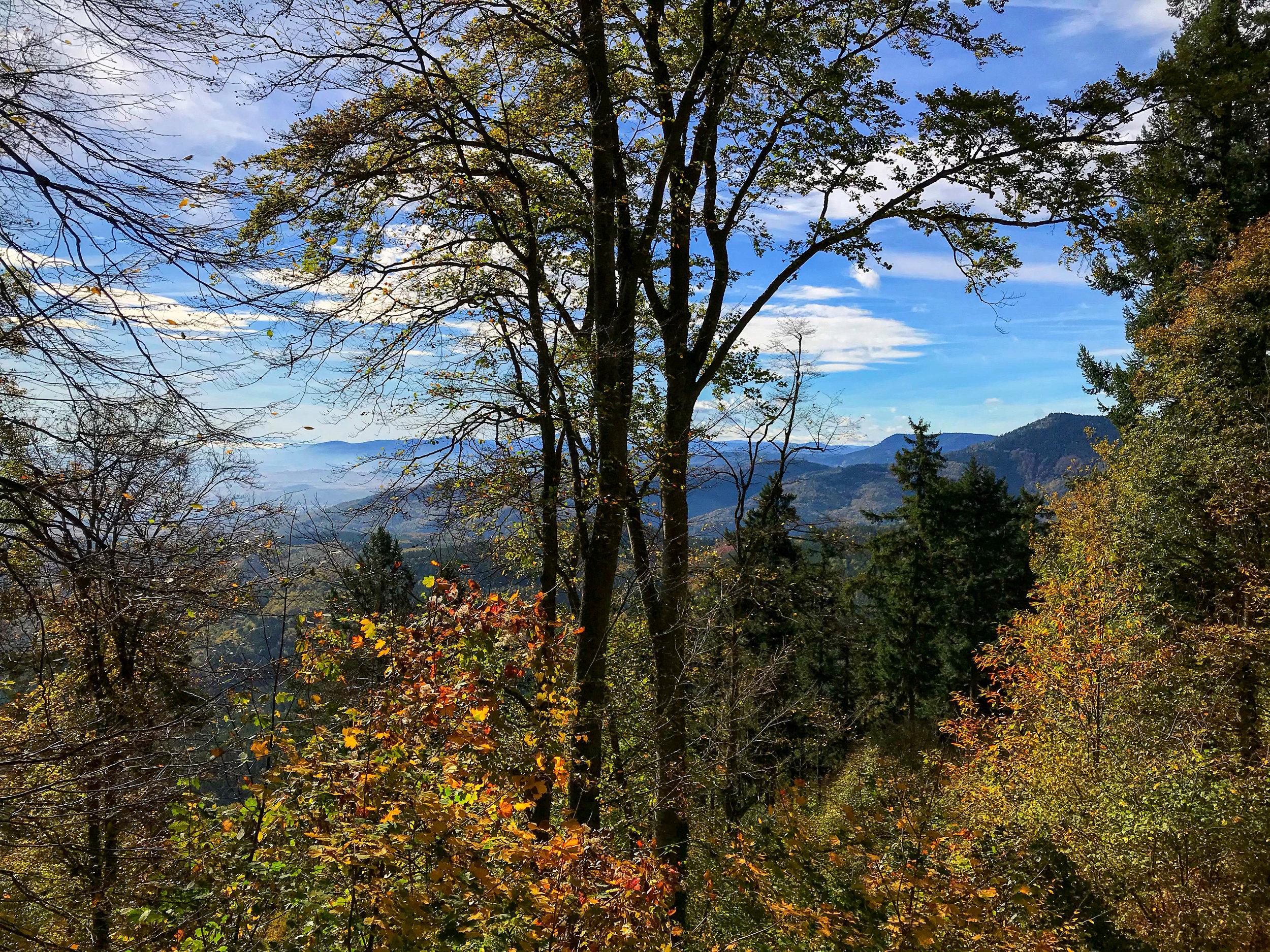 Autumn colour of the Vosges mountains