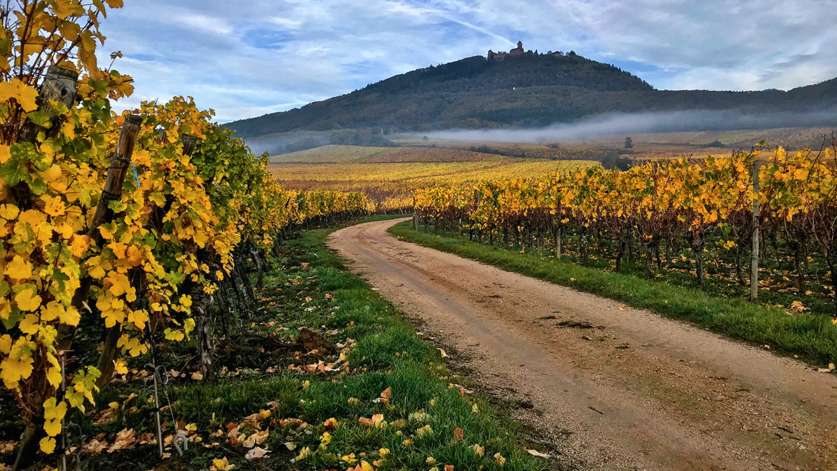 Autumn in Alsace © Adrian McGarry