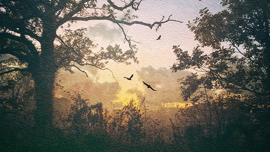 Dawn Flight by Adrian McGarry