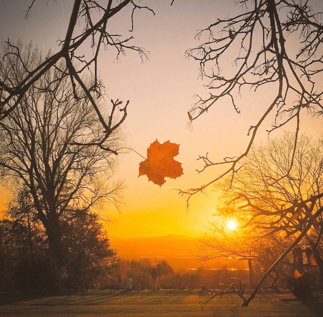 Hanging On (Ness Botanic Gardens) - Luke Neale.jpg