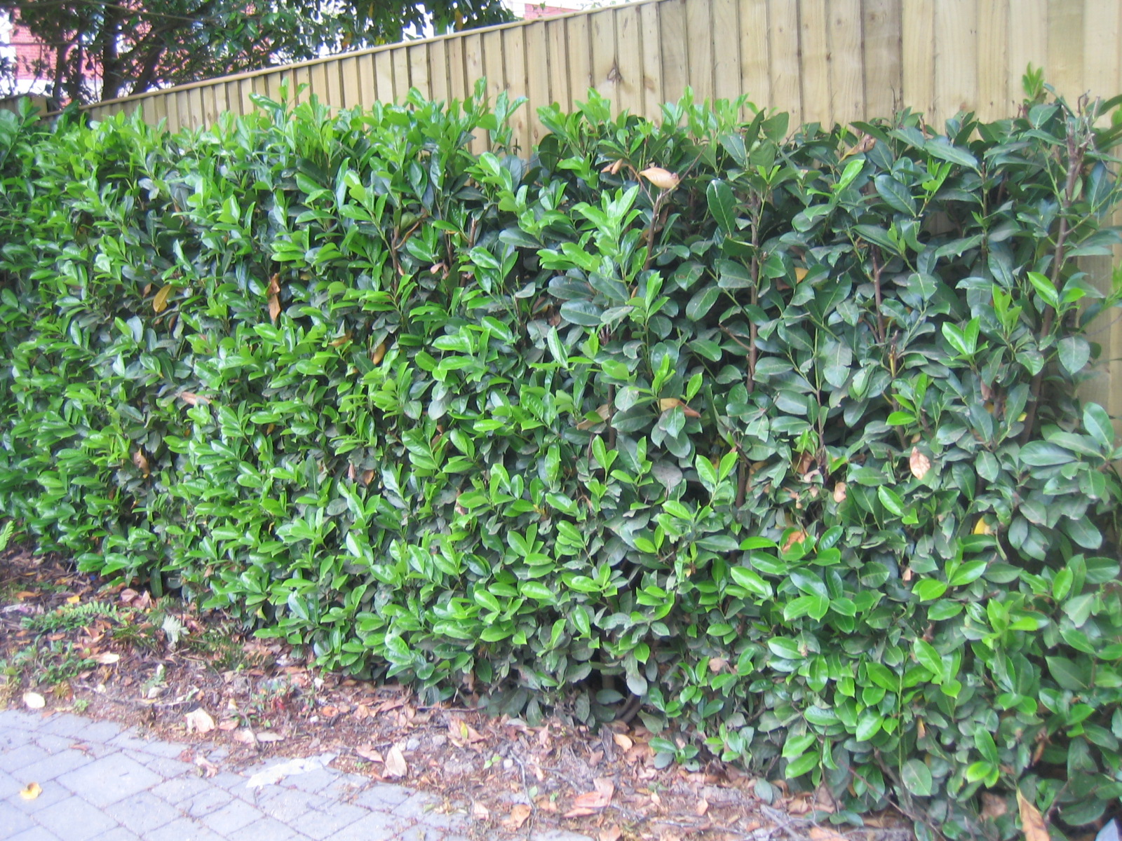 Hedge Boundary Image