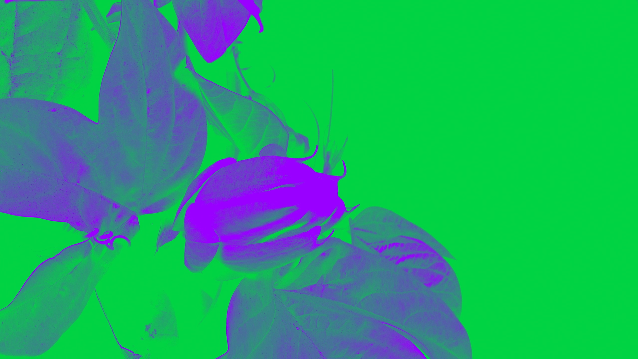 Lullaby_Verse_1 (0-00-00-16).png