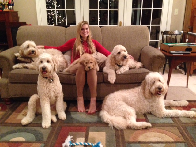 """Hazel is perfect--one of the best I've seen!  She loves all of her doodle cousins.  We are hoping to get our 10th doodle pup in the extended family!""--Kate--Lafayette, IN"
