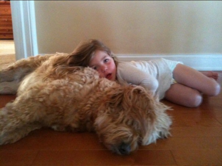 f1 goldendoodle molly