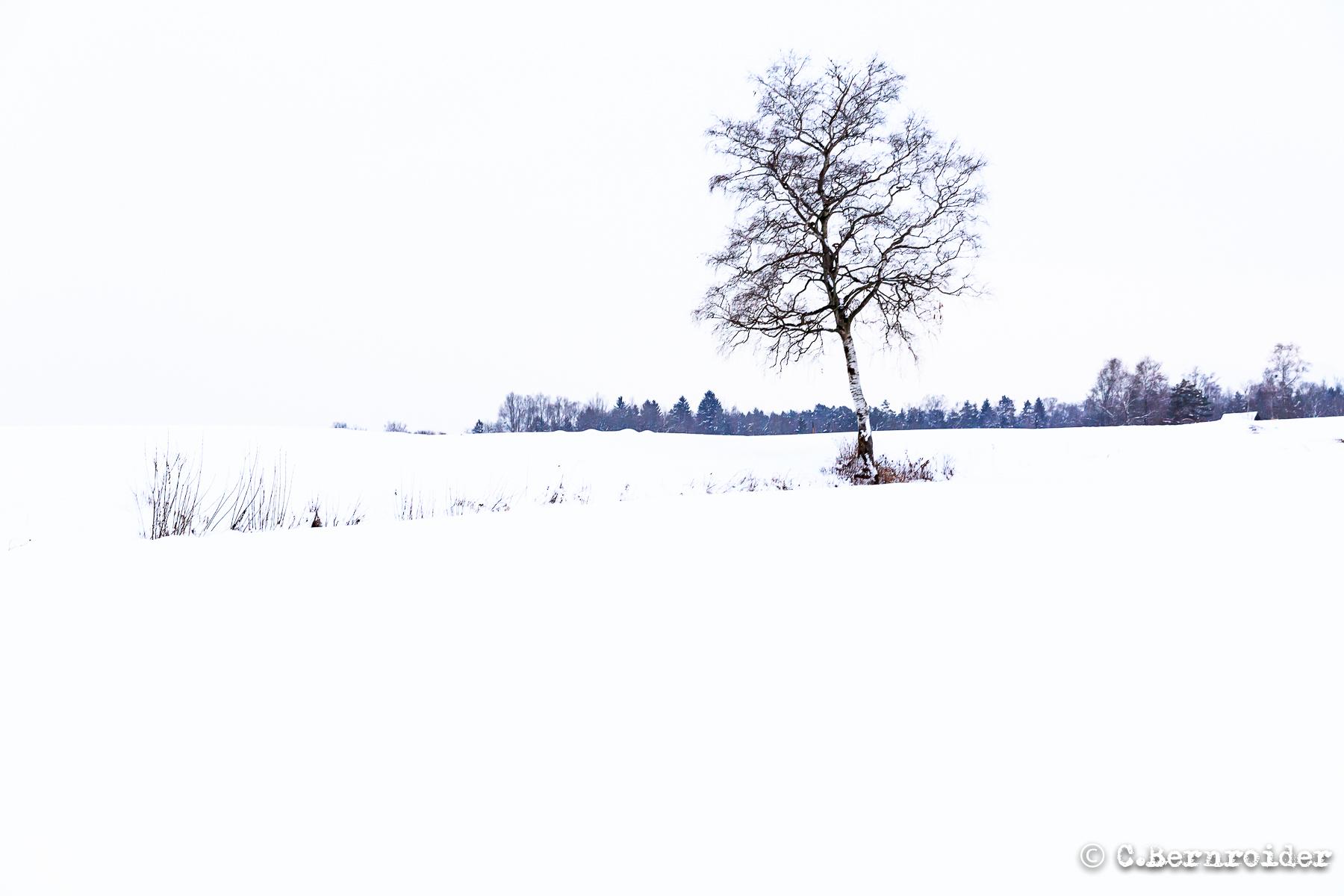 20170125_Kraeuterhofweg-5.JPG