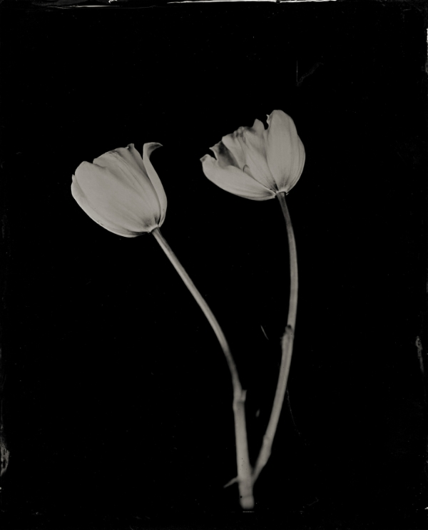 simple tulips.jpg