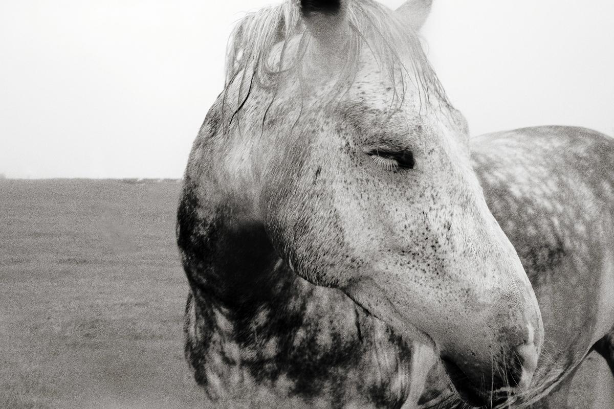 horse18.jpg