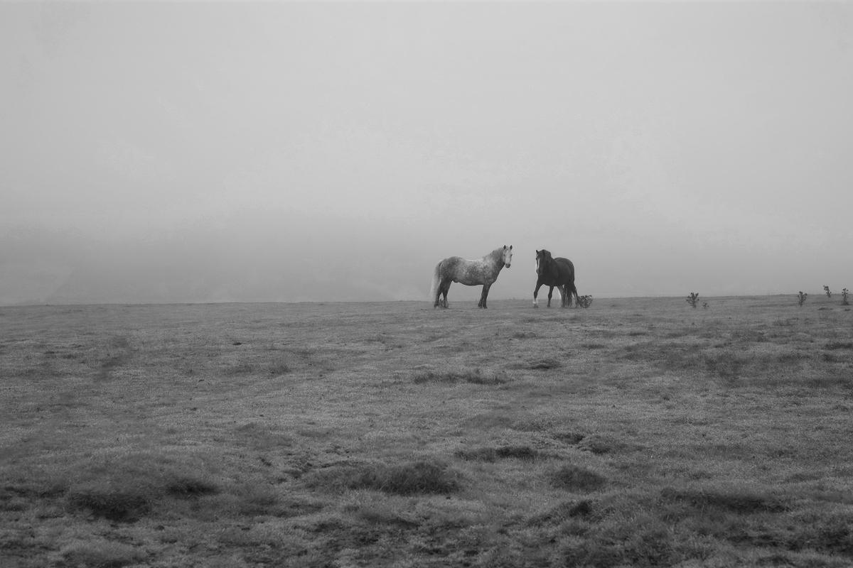 horse23.jpg