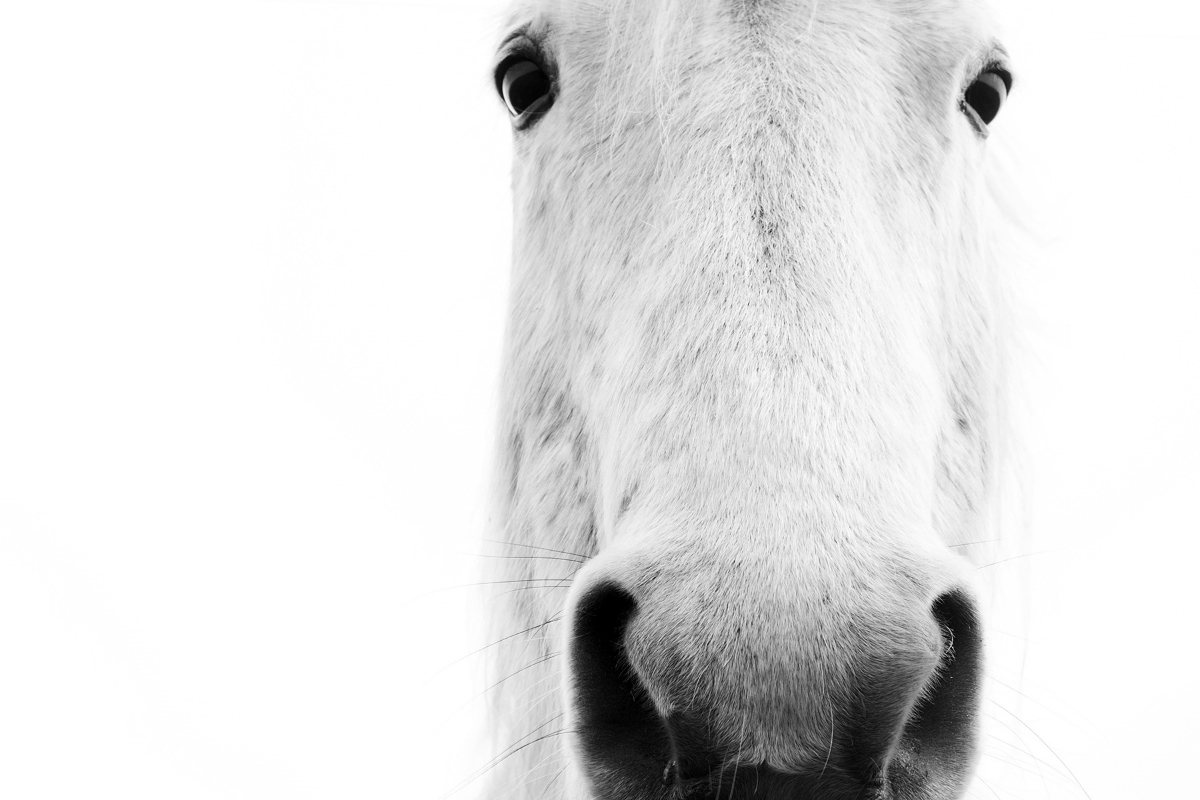 horse28.jpg