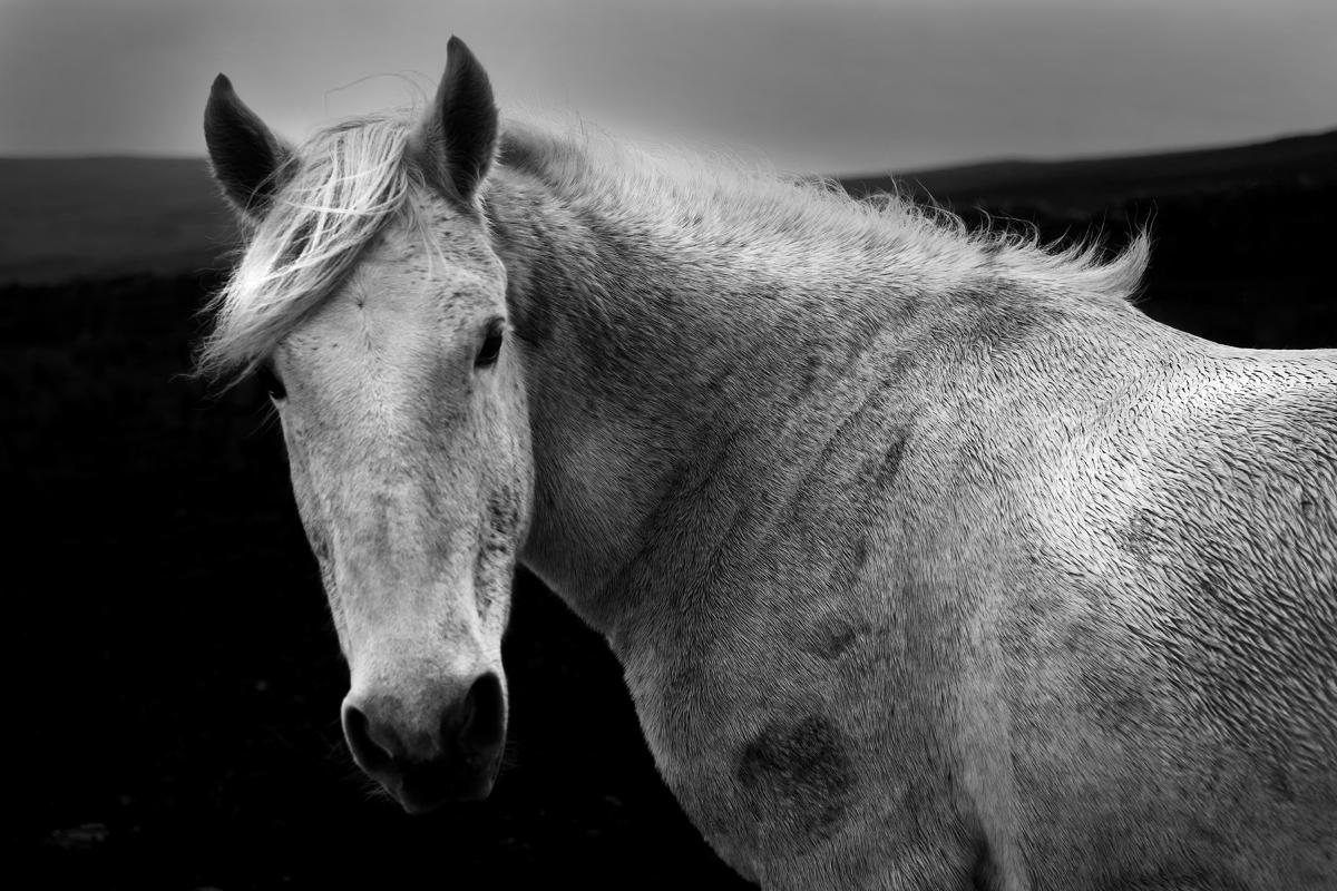 horse31.jpg