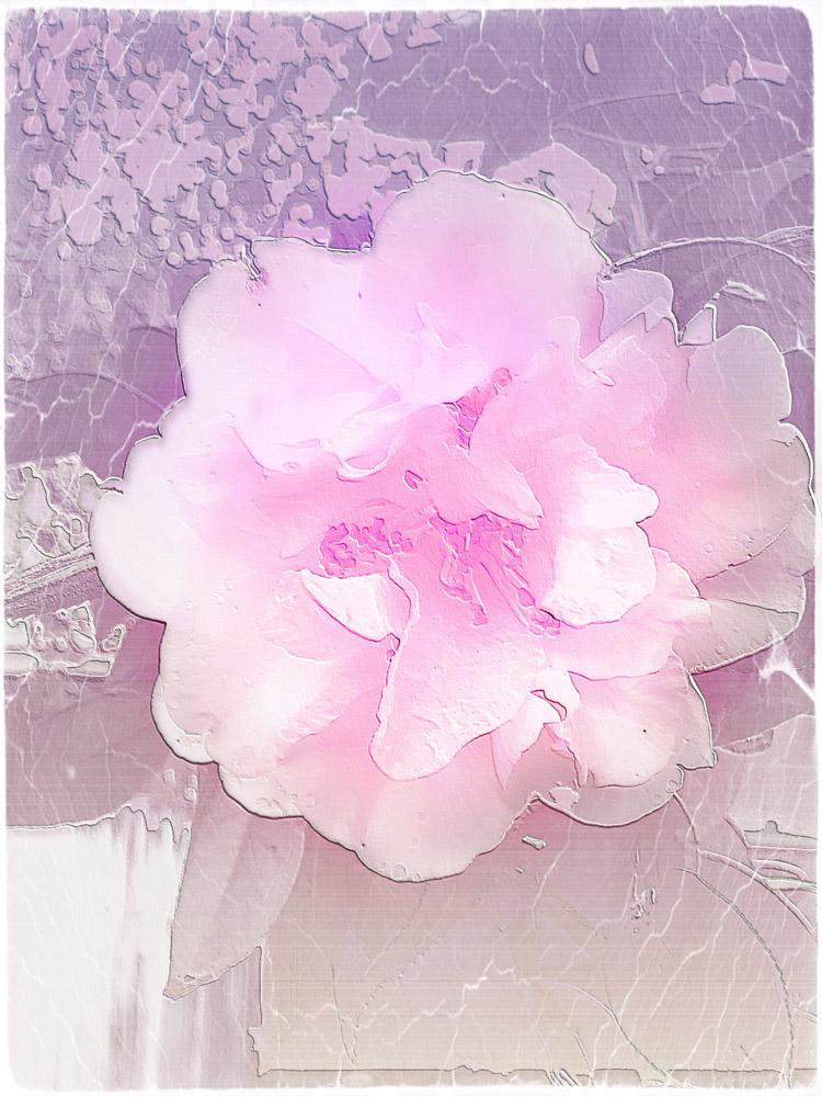 IMG_5952-2.jpg