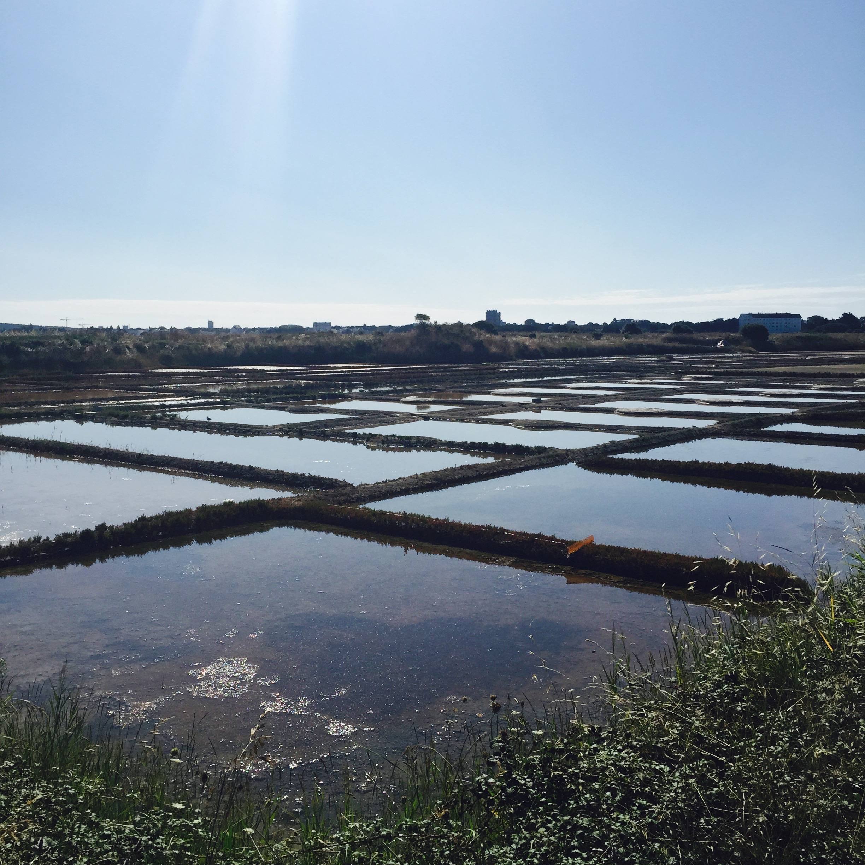France fleur de sel marshes.jpg