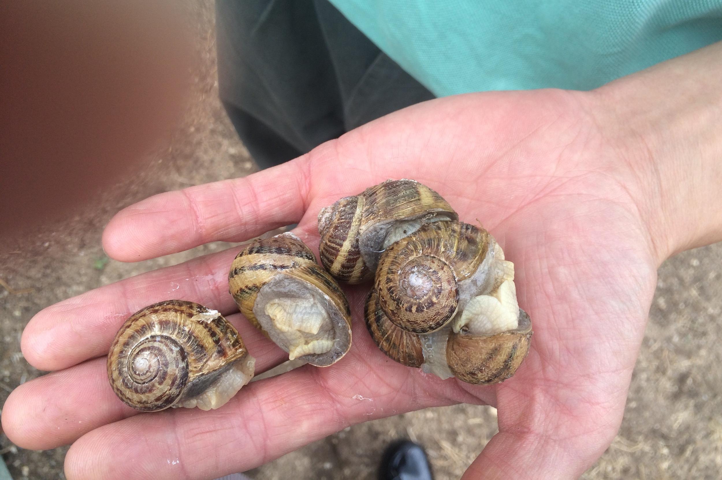France snails on hand.jpeg
