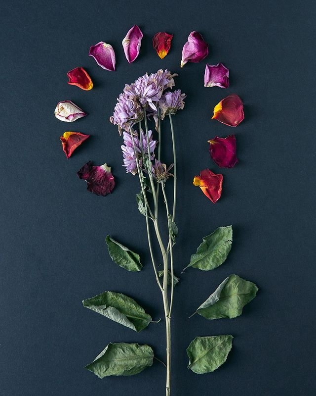 I encourage any organization to maintain a collection of abstract images that are brand aligned but do not market anything, like this lovely display of flowers. They are great accompaniments to communication pieces that are sensitive in nature—from recognizing a tragic world event to announcing a company decision that could be perceived as controversial.⠀⠀ --- #flowers #flowersofinstagram #flowerstagram #flowermagic #floral #simply_flowers #captures_flowers #beautifulflowers #flowerlove #photography #flowergram #flowerpower #flowerlovers #digitalmarketing #marketingdigital #businessowner #beyourownboss #entrepreneurship #entrepreneurlife #entrepreneur #entrepreneurs #smallbusinessowne #smallbusiness #solopreneur #rootstitches #davidleonmorgan