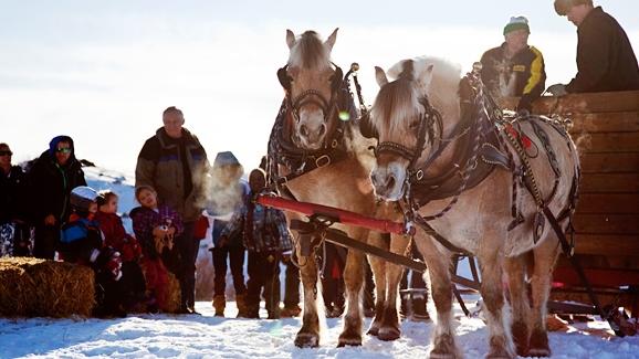fire-and-ice-horseys.jpg