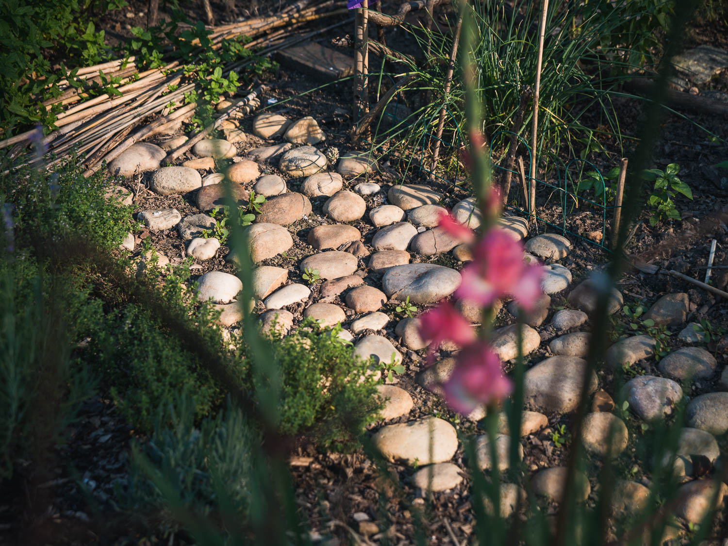 A stepping-stone path that allows farmers to reach plants in the center of their plots.