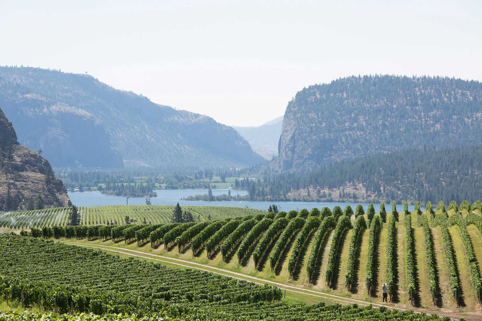 Blue-Mountain-Winery-Okanagan-1.jpg