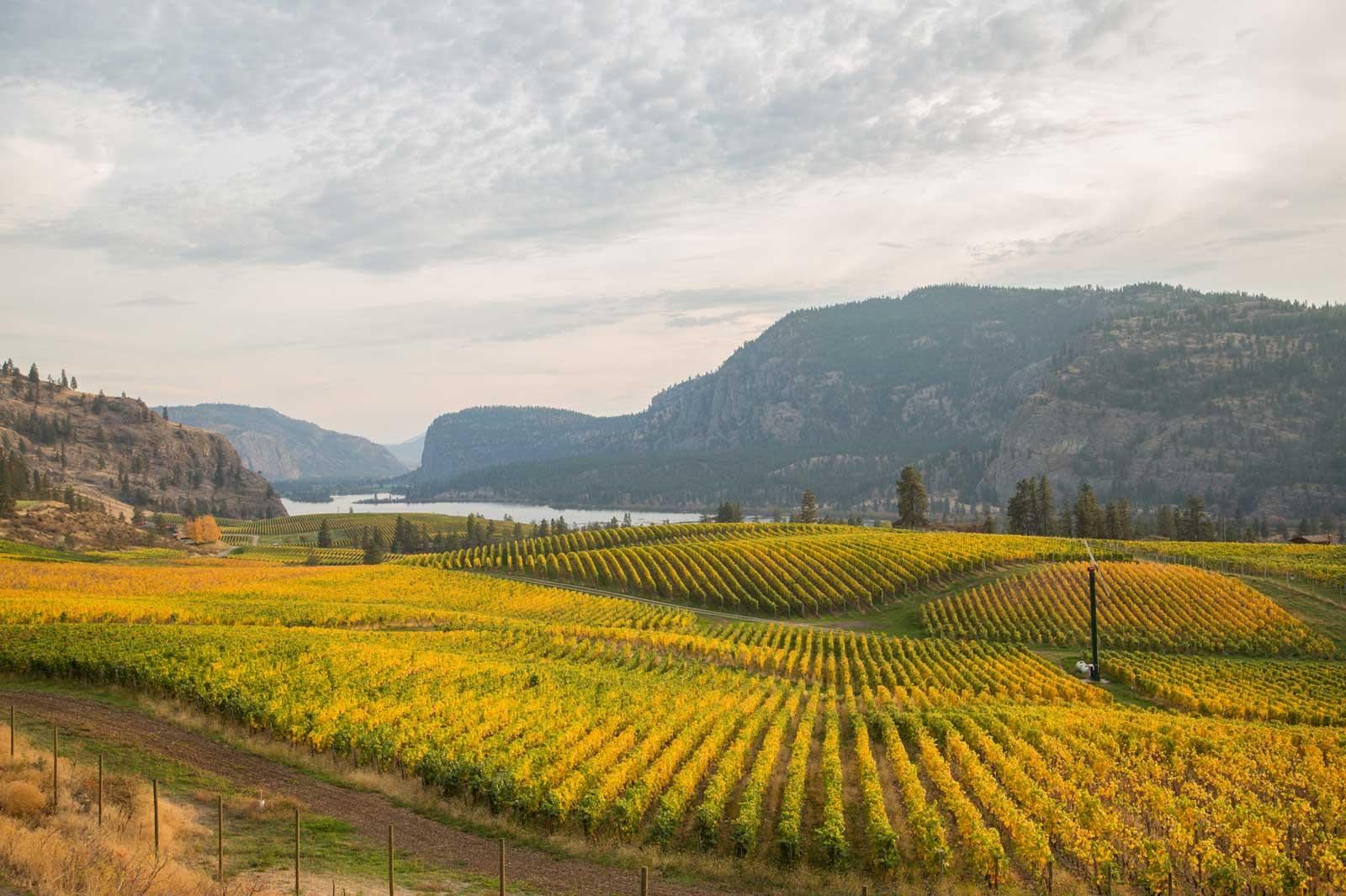 Blue-Mountain-Winery-Okanagan-3.jpg