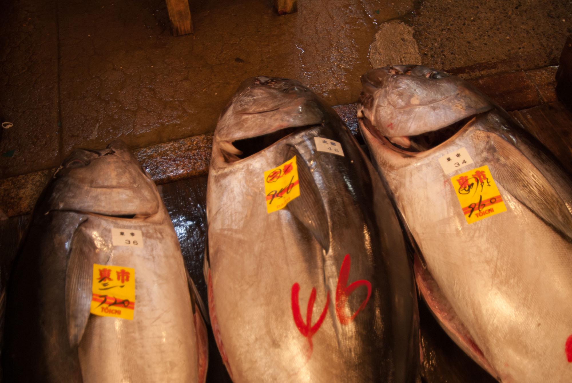 Tsukiji-Tokyo-ckstenberg-5344.jpg
