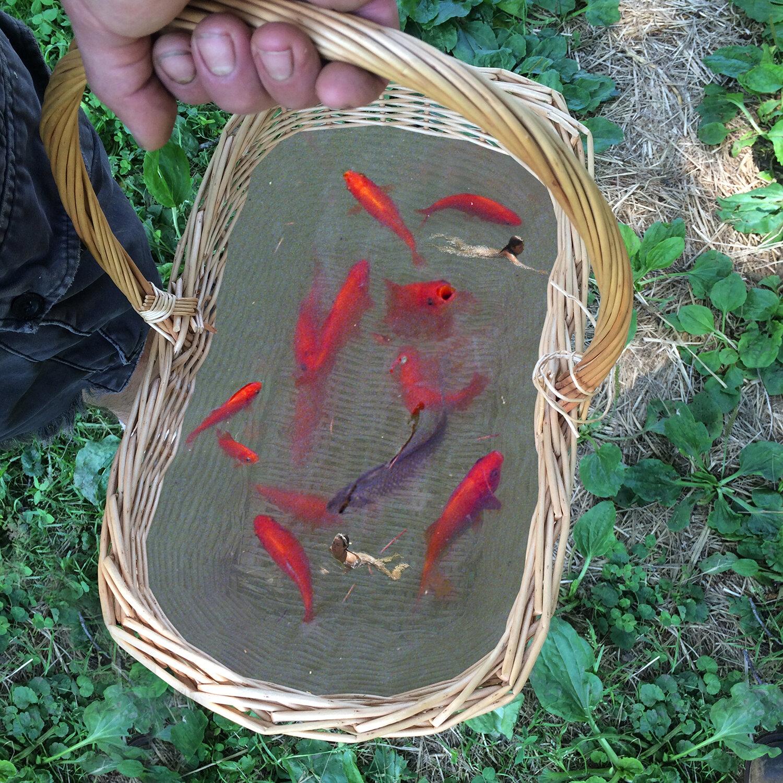 BretWoodard_fishbasket.jpg