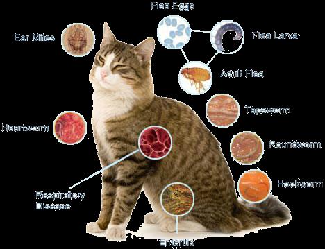 FLEAS, TICKS, WORMS CATS