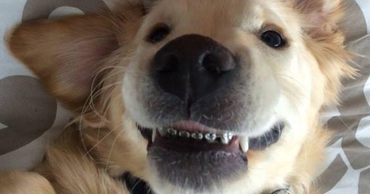 Pet Orthodontics