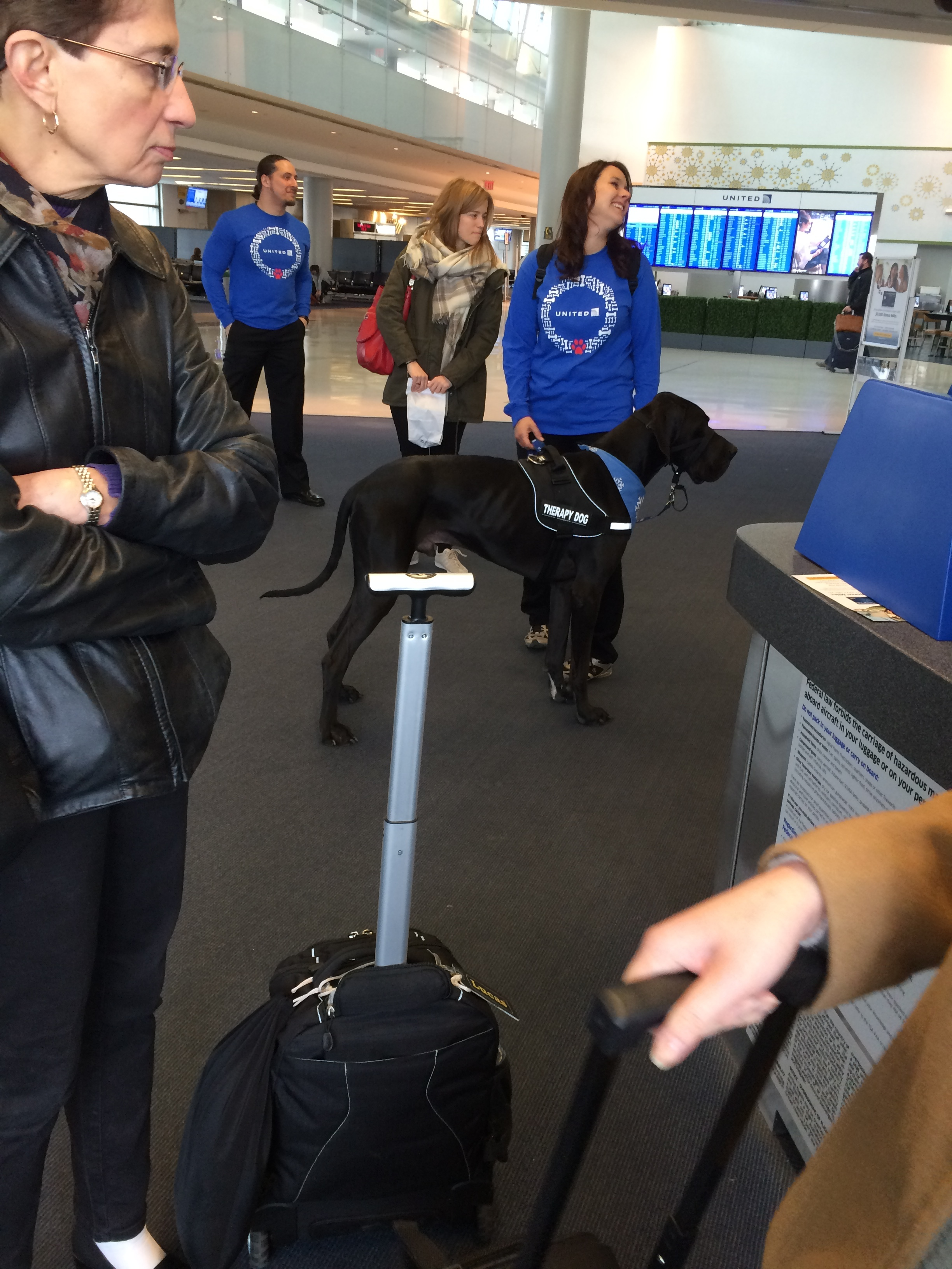 United bringing therapy dogs so we can cope with their delays