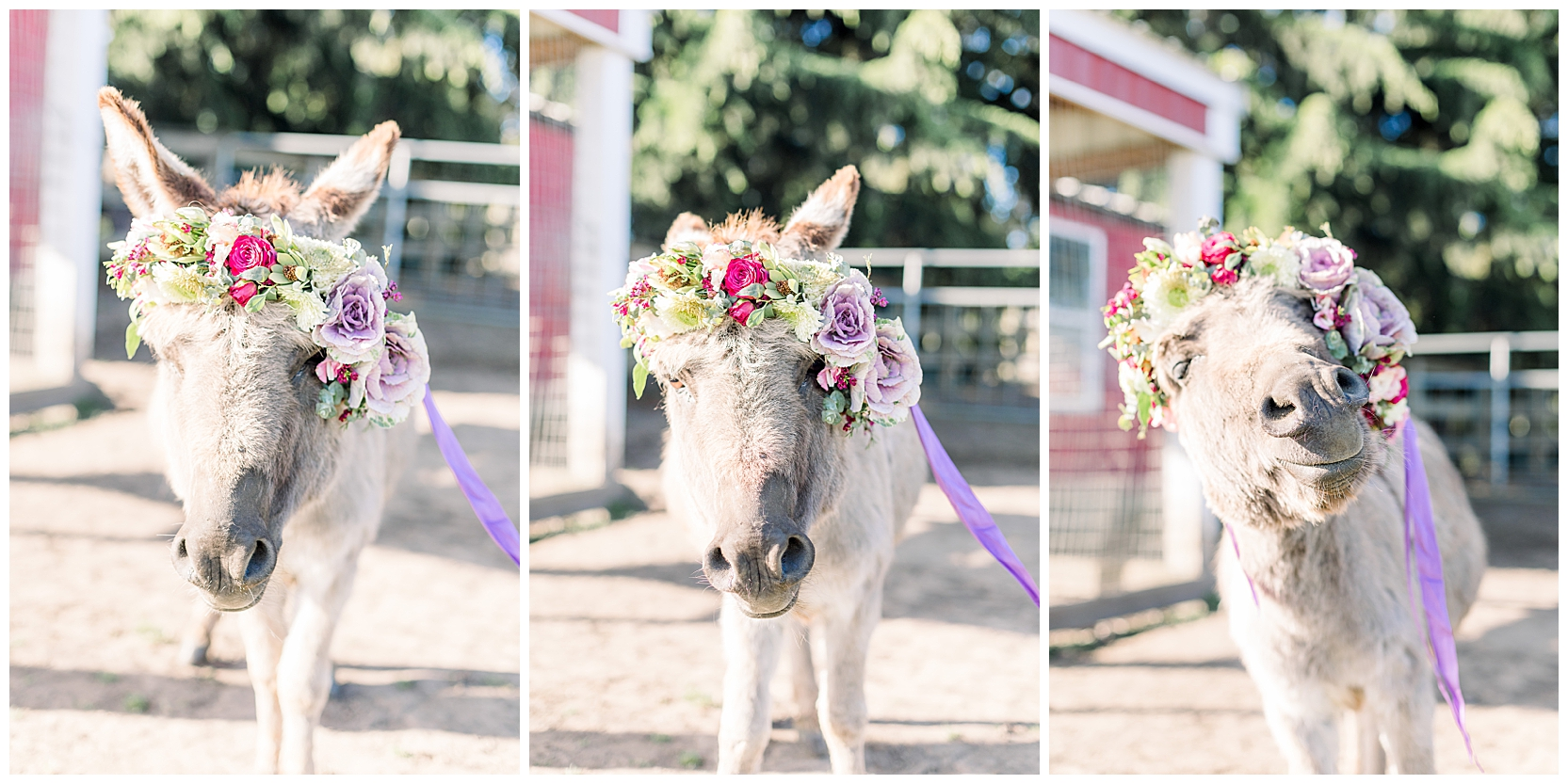 jessicafredericks_st petersburg_wedding_photographer_bridesmaid_farm_donkey_flower crown_inspo_0002.jpg