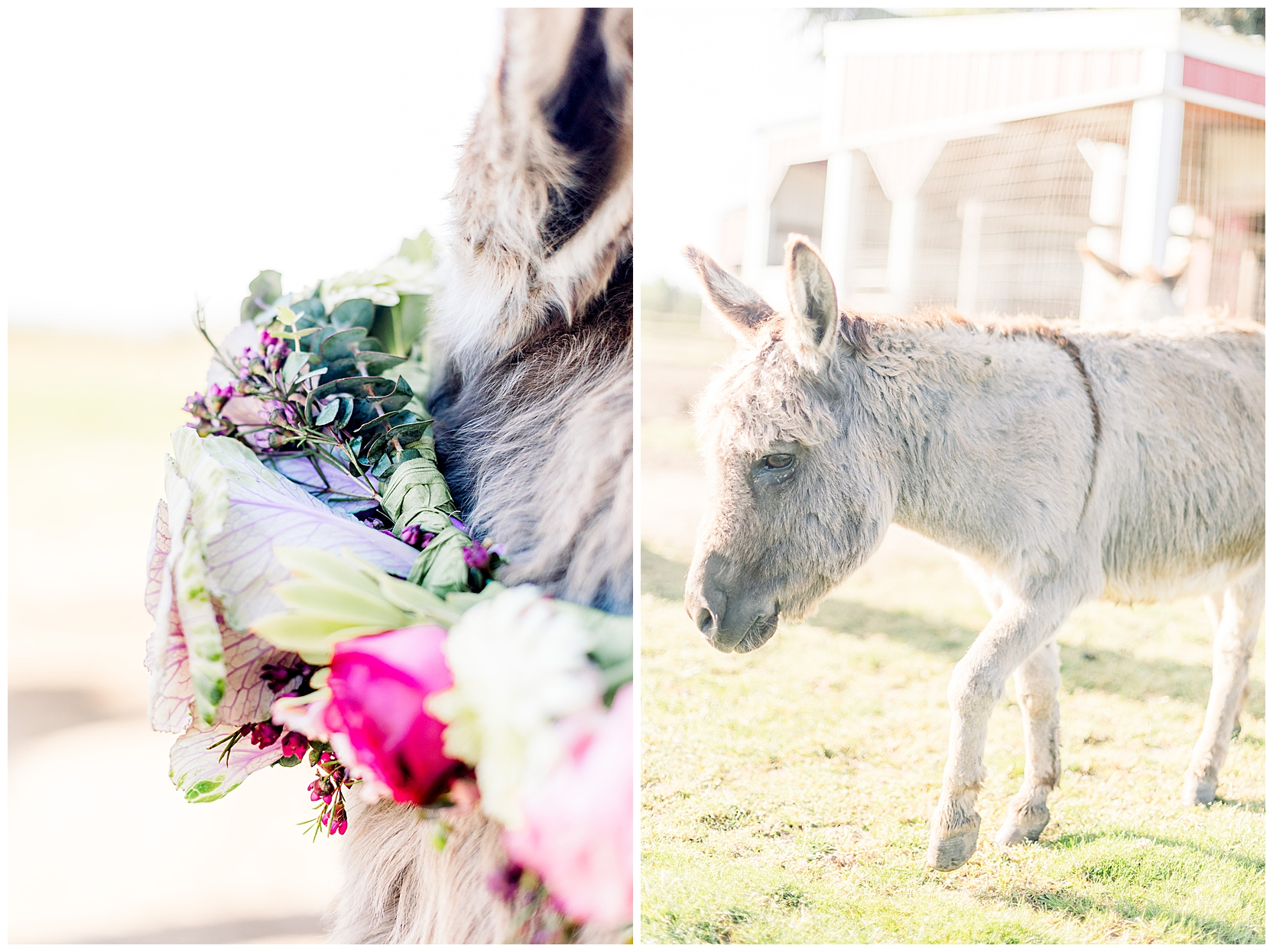 jessicafredericks_st petersburg_wedding_photographer_bridesmaid_farm_donkey_flower crown_inspo_0004.jpg