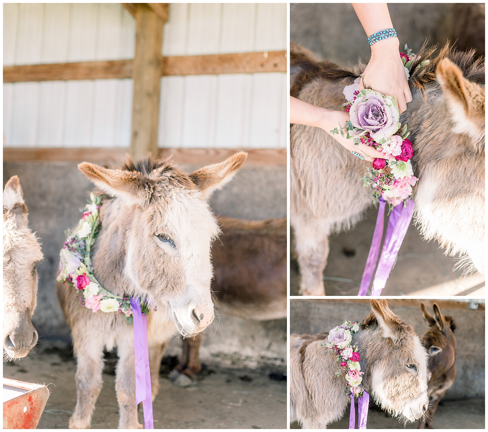 jessicafredericks_st petersburg_wedding_photographer_bridesmaid_farm_donkey_flower crown_inspo_0012.jpg
