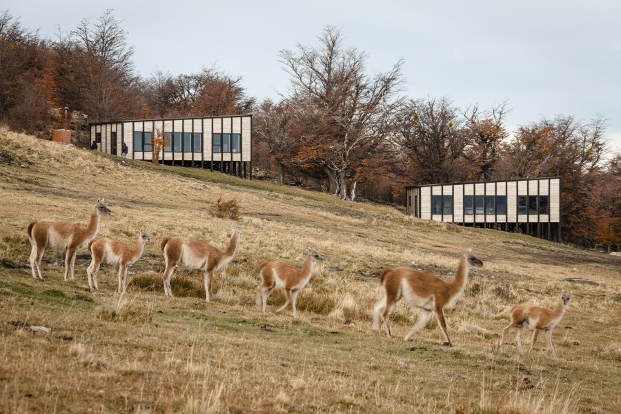 21665-View%20of%20villas%20with%20guanacos-Large.jpg