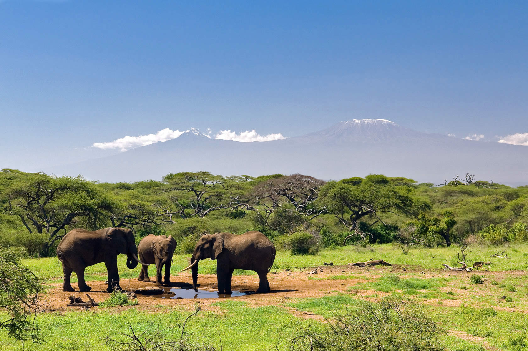 OlDonyoWuas_ElephantDrinkingWithMountKilimanjaro_May2009_reduced.jpg