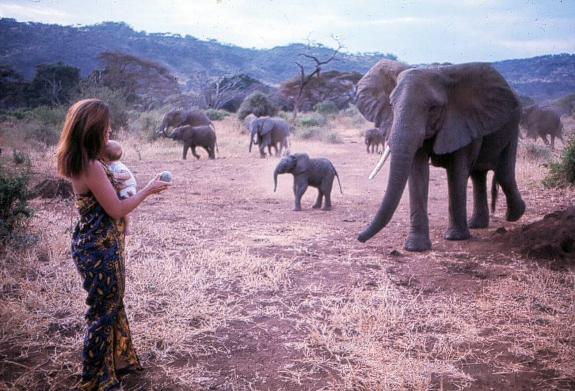 Saba_elephants.jpg