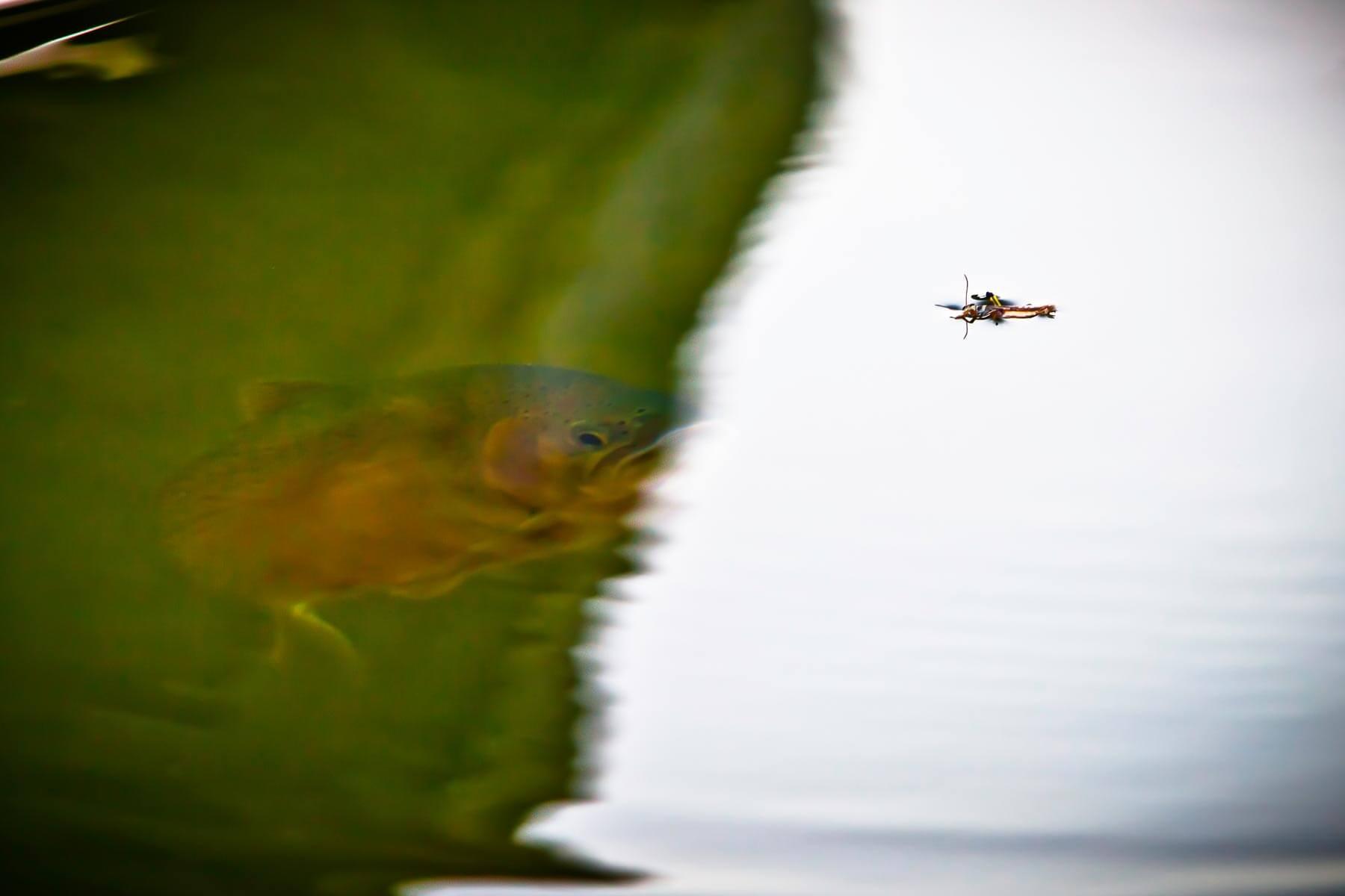 flyfishing-montana4.jpg