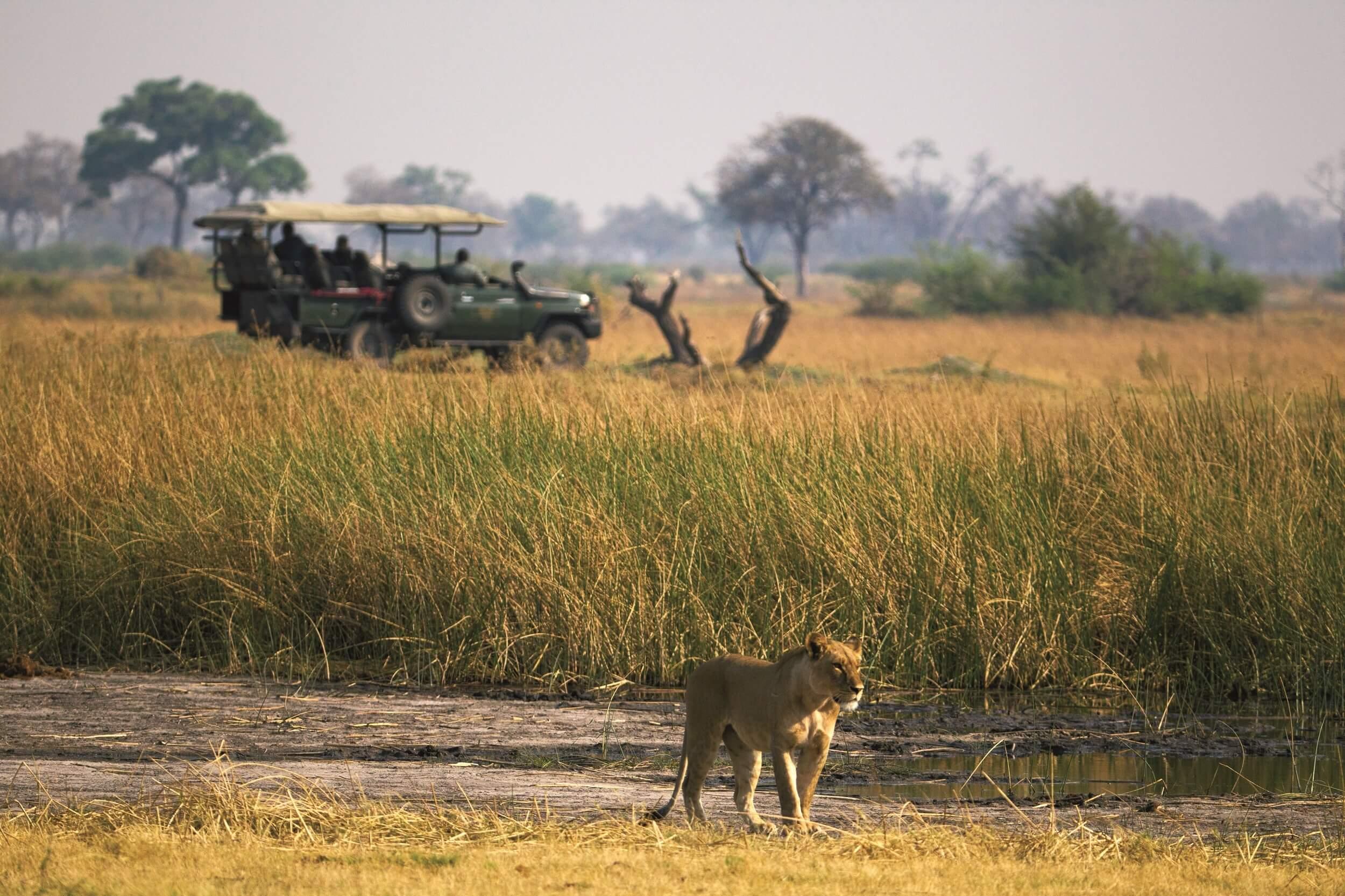 _Copyright_Beverly_Joubert_Duba_Safari_Botswana_3969.jpg