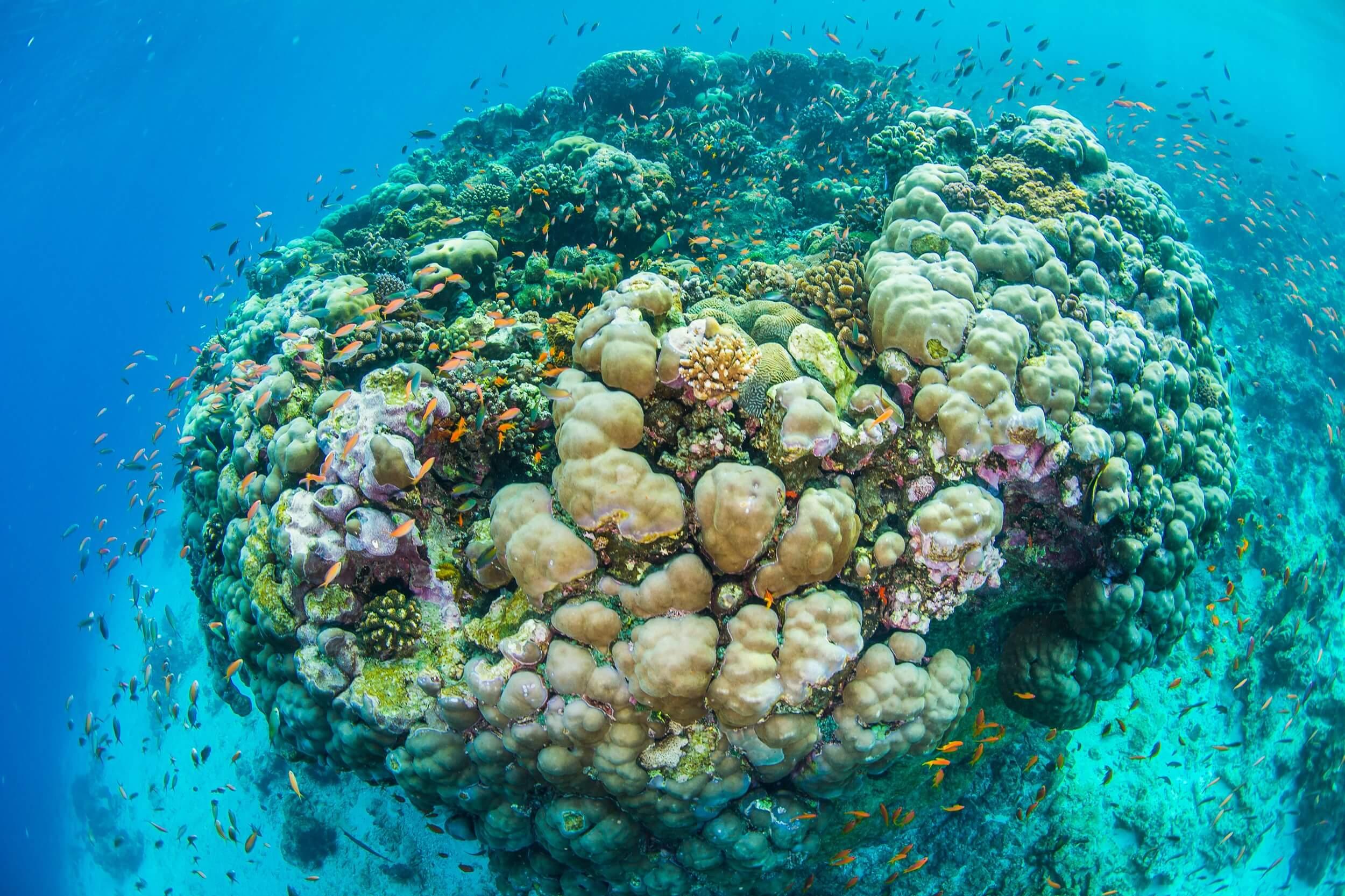 UnderwaterCoral.jpg